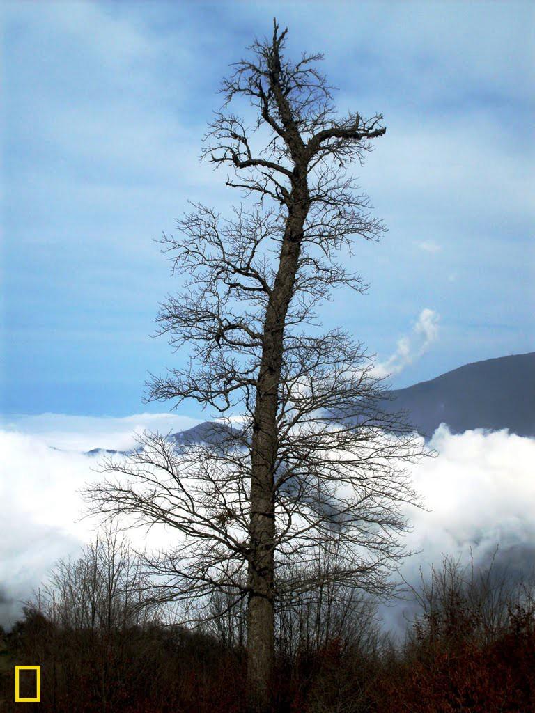 Ev wêne di zivistana 2010'ê li daristana Tûskistanê di navbera Şahrûd û Gurganê li bakurê Îranê hatiye kişandin. Li wê daritsanê mij û dûman wek deryayekê li ber mirov berfireh dibe.