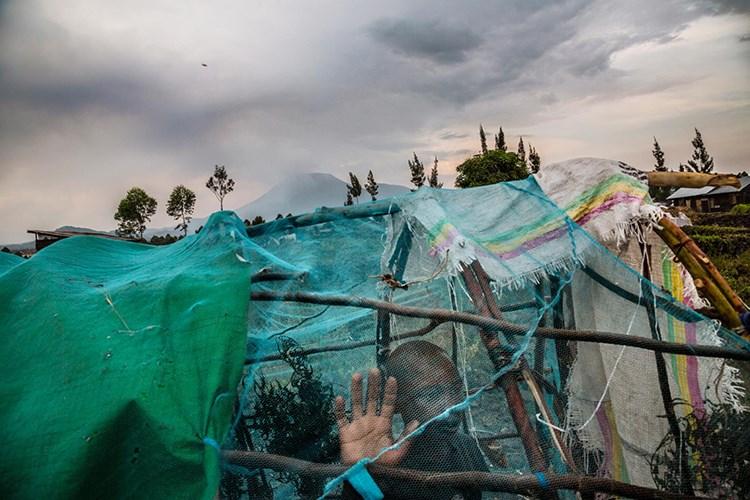Li bajarê Gomaya Komara Kongoya Demokratîk, ji bo welatiyên ku ji mal û warê xwe reviyane baregehek hatiye avakirin. Zarokek, li baregeha xwe ya demkî temaşe derve dike. [Marcus Bleasdale, National Geographic]