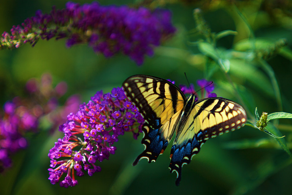 butterfly_2_by_ralfpfaarphotography-d6e3niw