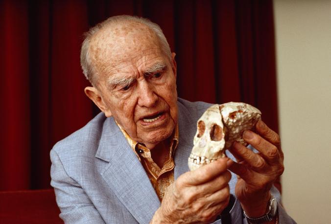 """Xwediyê teoriya """"meymûnê kujer"""" ê ku hewl dide peresîna mirovan rave bike Raymond Dart yekem australopithecusa ku hatibû dîtin kiloxê serê Zarokê Toungê digire. [Wêne: David L. Brill, National Geographic Creative]"""