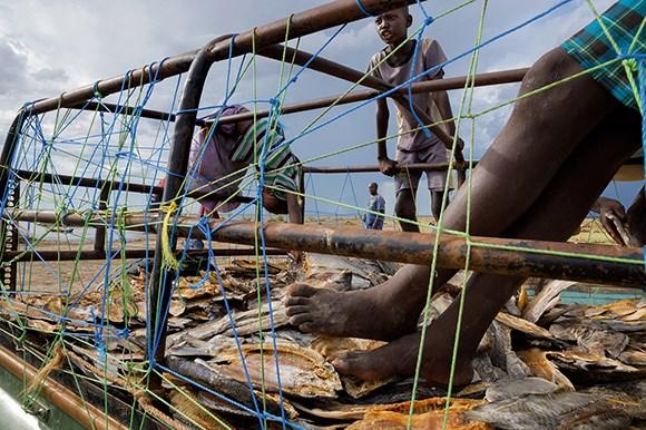Li gundê Selichoyê zarok di kamyonê de dileyîzin ku têde tijî masiyên hişkkirî hene. Masiyên ku ji bo proteînê gelekî giring in li Komara Demokratîk a Kongoyê ku gelekî dûr e jî tê firotin.