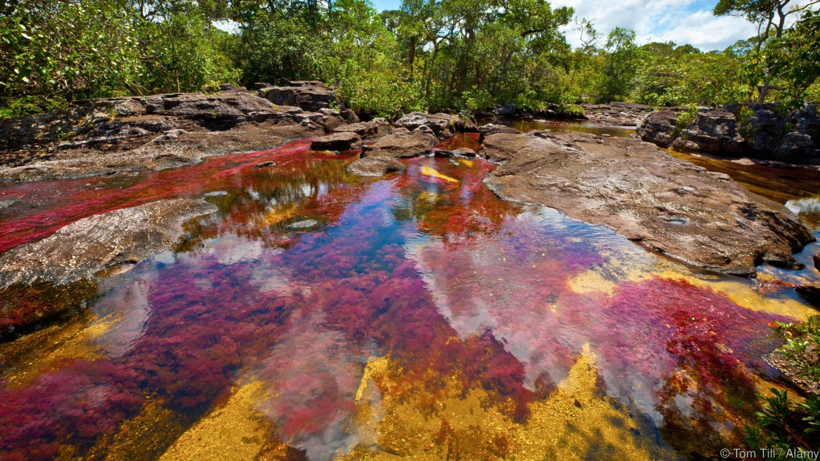 DPWR31 Colors at Cano Cristales, Colombia Underwater plants (Macarenia clarigera) endemic to small stream and area, Llano area
